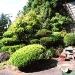 緑豊かな南側の庭